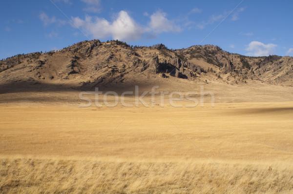 Mooie landschap westerse Verenigde Staten Idaho gras Stockfoto © cboswell