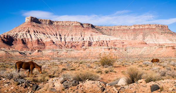 Yatay manzaralı çöl güneybatı manzara hayvan Stok fotoğraf © cboswell