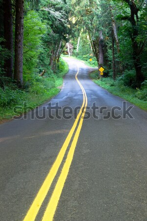 Two Lane Road Cuts Through Rainforest Stock photo © cboswell