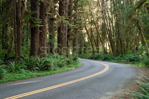 Eğri yol rainforest iki yol Stok fotoğraf © cboswell