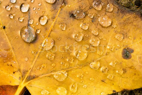Levelek tél természet föld őszi idény apró Stock fotó © cboswell