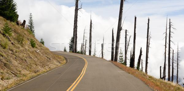 Open Road Damaged Landscape Blast Zone Mt St Helens Volcano Stock photo © cboswell