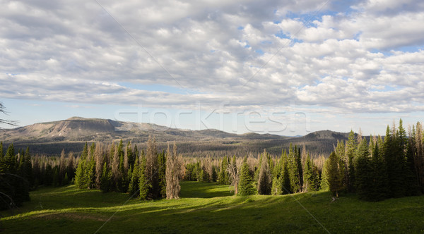 Table Mountain Wyoming Backcountry National Forest  Stock photo © cboswell