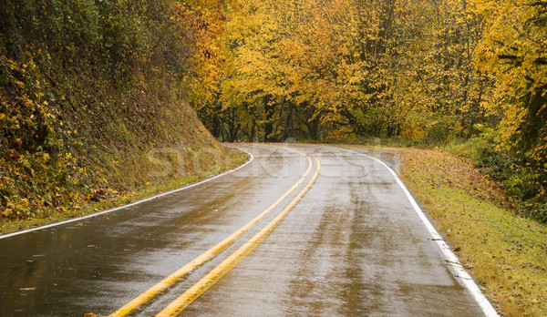 Wet Blacktop Two Lane Highway Curves Through Fall Trees Autumn Stock photo © cboswell