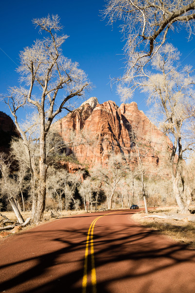 Ghostly Ominius Trees Devoid of Leaves Road to Zion Stock photo © cboswell