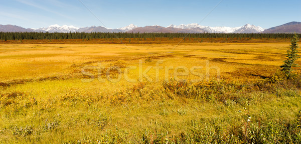 Denali Range Central Alaska Wilderness Area Stock photo © cboswell