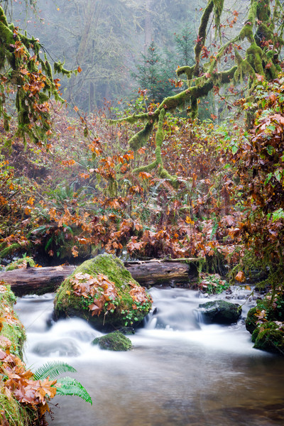 Stock photo: Fall Autumn Forest Stream Bubbling Brook Mossy River