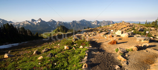Paradise Mount Rainier Adams Mountain Tatoosh Range Washington S Stock photo © cboswell
