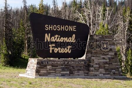 Horizontaal bos teken west bomen communicatie Stockfoto © cboswell
