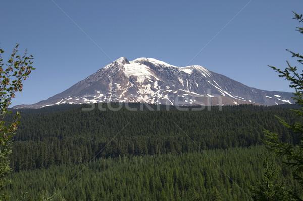 Mount Adams Cascade Range Gifford Pinchot National Forest USA Stock photo © cboswell