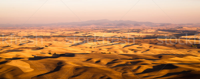 Rolling Hills Agricultural Land Palouse Region Eastern Washingto Stock photo © cboswell
