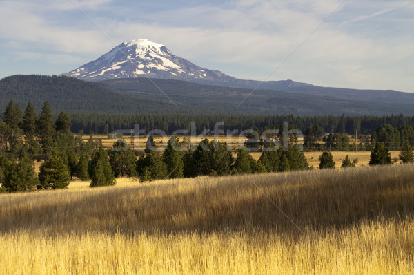 Golden Grassland Countryside Mount Adams Mountain Farmland Lands Stock photo © cboswell