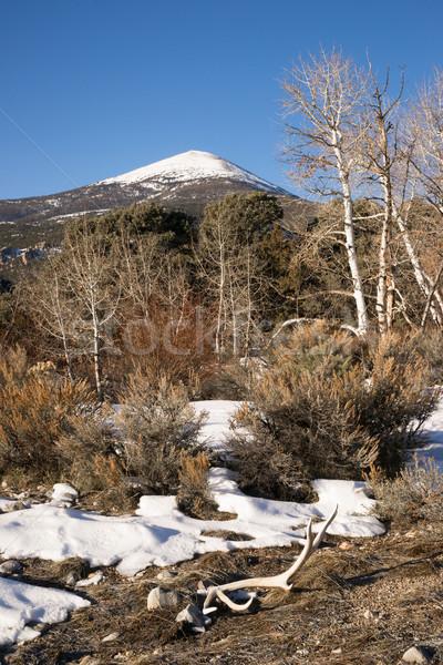 High Mountain Peak Great Basin Region Nevada Landscape Elk Antle Stock photo © cboswell