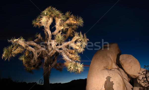 Sunset Shadow Rock Formation Joshua Tree National Park Stock photo © cboswell
