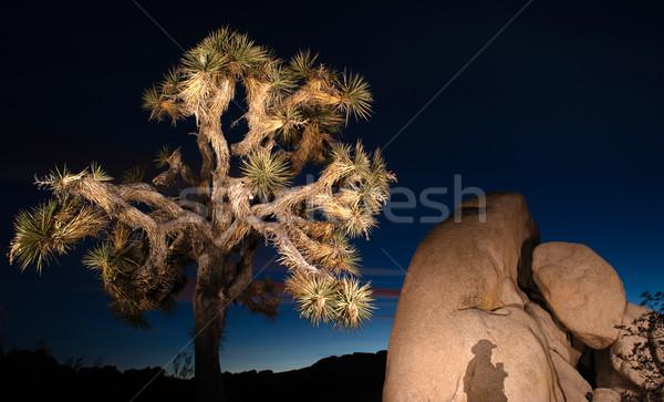 Zonsondergang schaduw rotsformatie boom park fotograaf Stockfoto © cboswell