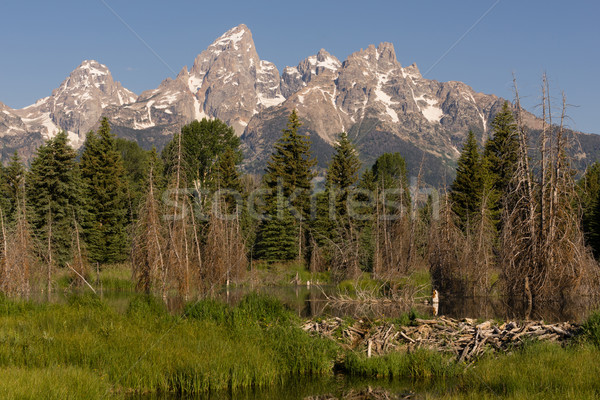 Beaver Dam Forest Lake Teton National Park Wyoming Stock photo © cboswell