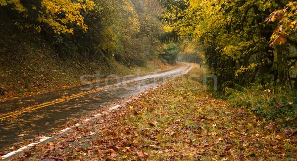 Foto stock: Molhado · chuvoso · outono · dia · folhas · cair
