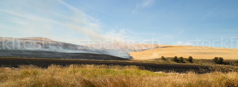 Agriculture Farming Burns Plant Stalks Harvest Fire Tractor Stock photo © cboswell