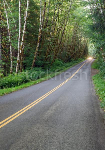 Asfalt yol rainforest park araba farlar Stok fotoğraf © cboswell