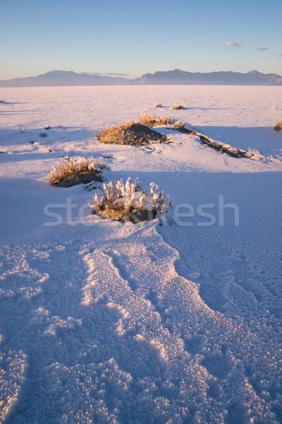 Vertical Sage Brush Frozen Ground Salt Flats Utah Desert Stock photo © cboswell