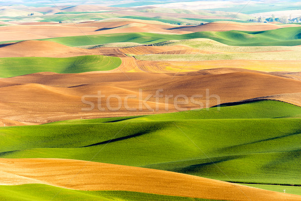 Palouse Region Steptoe Butte Farmland Rolling Hills Agriculture Stock photo © cboswell