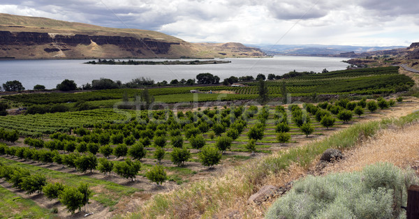 Farmer Fields Orchards Fruit Trees Columbia River Gorge Stock photo © cboswell