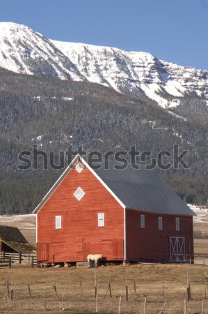Livestock Wind Break Horse Leaning Red Barn Mountain Ranch Stock photo © cboswell
