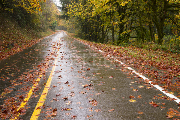 Wet Rainy Autumn Day Leaves Fall Two Lane Highway Travel Stock photo © cboswell