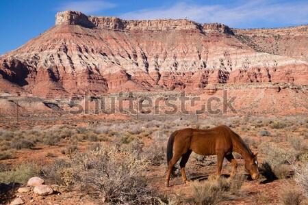 Dikey manzaralı çöl güneybatı manzara hayvan Stok fotoğraf © cboswell