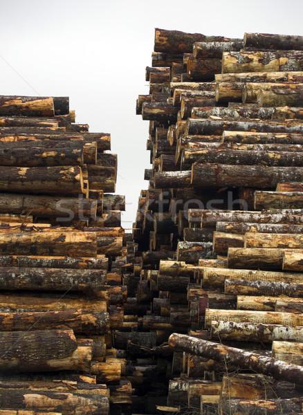 Fa fektet egymásra pakolva fa fűrészmalom fa Stock fotó © cboswell