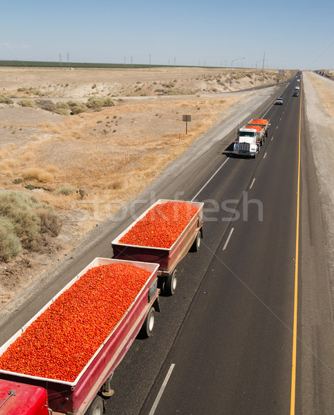 Roma Tomato Truckloads Travel Via Semi-Truck to Market Stock photo © cboswell