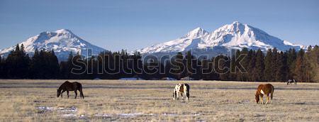 Ranch animali tre sorelle montagna Oregon Foto d'archivio © cboswell