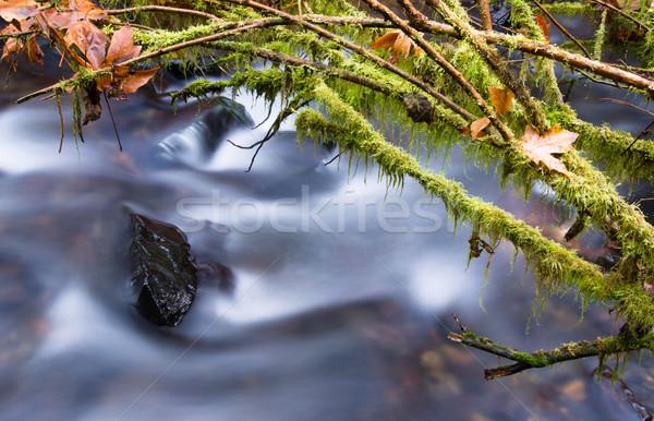 Cascade sentier magnifique nord-ouest côte rivière Photo stock © cboswell