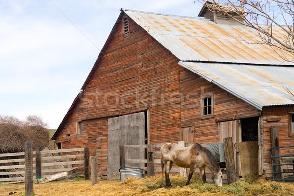Cavallo farm ranch fienile natura Foto d'archivio © cboswell