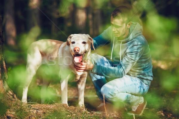 Köpek orman yaz gün doğa Stok fotoğraf © Chalabala
