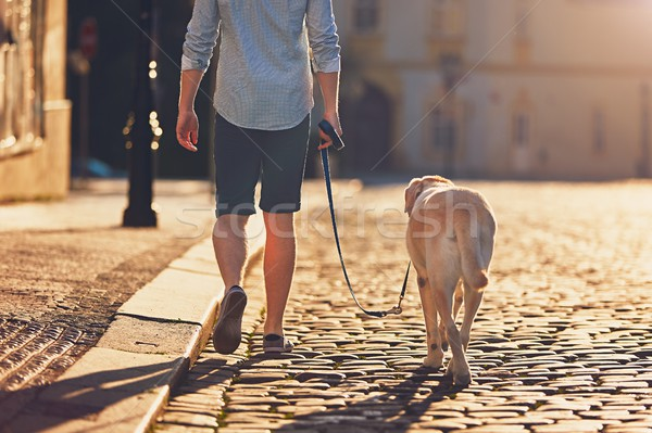 Morning walk with dog Stock photo © Chalabala