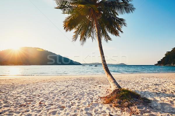 Gün batımı cennet pastoral plaj güneş Stok fotoğraf © Chalabala
