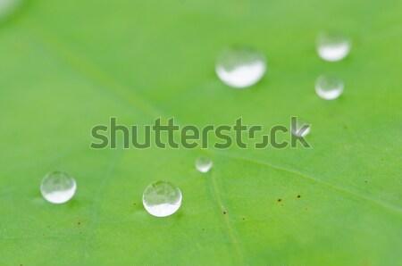 Krople kroplami wody wody Lotos liści projektu Zdjęcia stock © chatchai