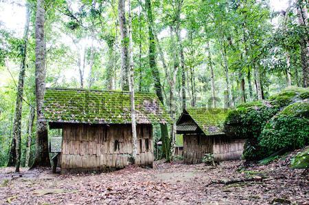 Ahşap ev eski Rainforest yol orman Stok fotoğraf © chatchai