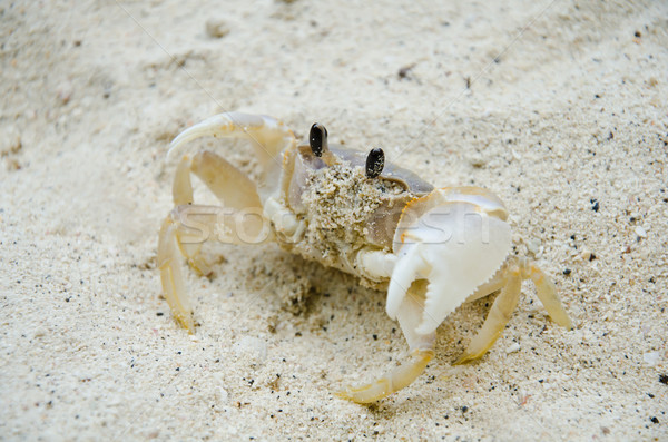 crab on the beach Stock photo © chatchai