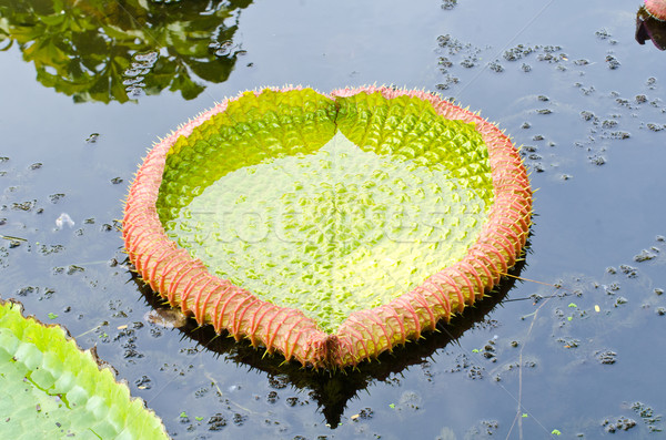 Pozostawia gigant kwiat wody charakter lata Zdjęcia stock © chatchai