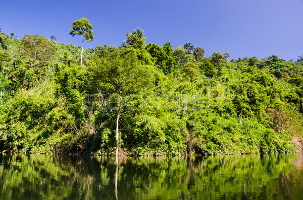 Reservoir in forest. Stock photo © chatchai