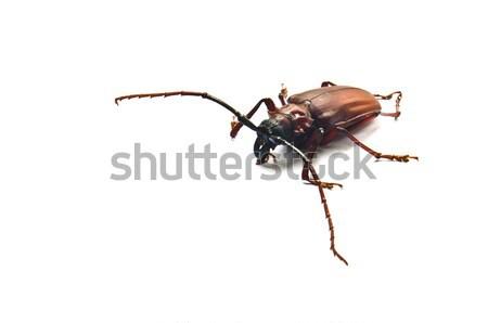 Besouro branco madeira folha animal fundos Foto stock © chatchai