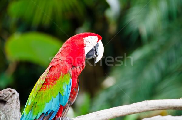 Papugi charakter miłości ptaków zielone życia Zdjęcia stock © chatchai