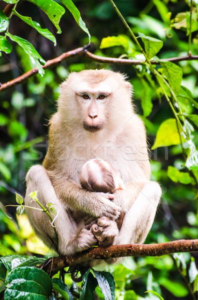 Aap tropische regenwoud baby omarmen moeder Stockfoto © chatchai