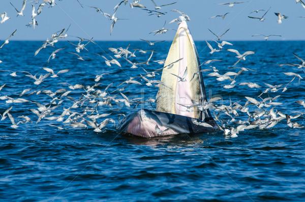 Wielorybów Tajlandia ryb morza Zdjęcia stock © chatchai