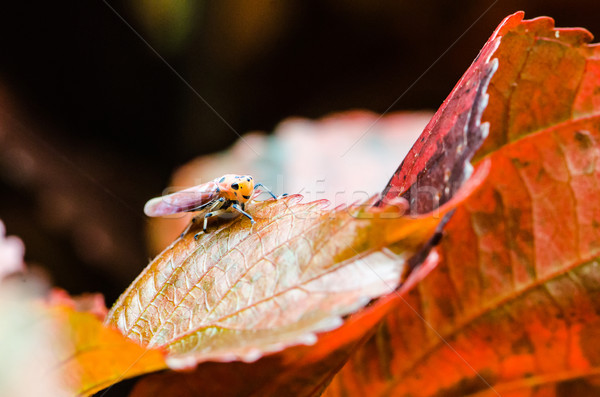 Insects Stock photo © chatchai