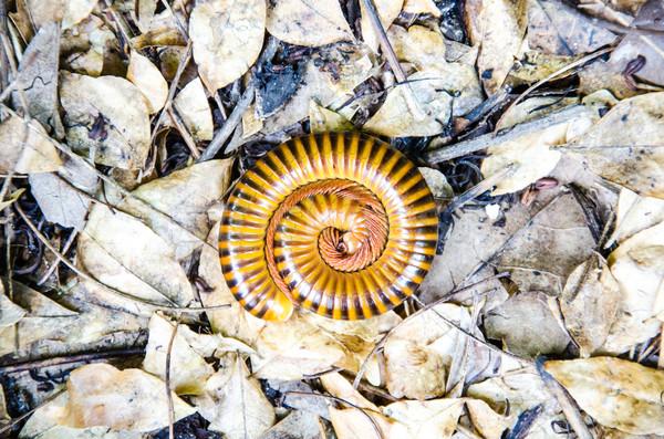 W górę pozostawia ziemi głowie anteny makro Zdjęcia stock © chatchai