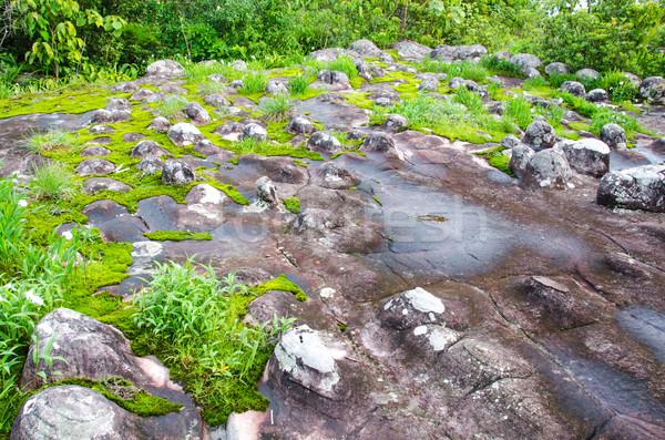 Rock naturalnych drzewo deszcz kamień Zdjęcia stock © chatchai