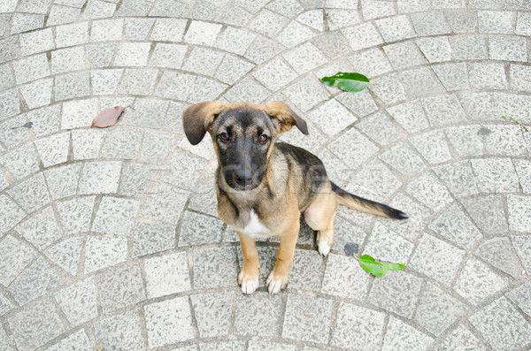 Psa posiedzenia cegły piętrze szczeniak nieznany Zdjęcia stock © chatchai